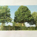 Vragen over stacaravans recreatiepark Oude Maas + bomenkap